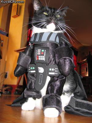 L'univers des Geeks - Page 5 Cat_costume