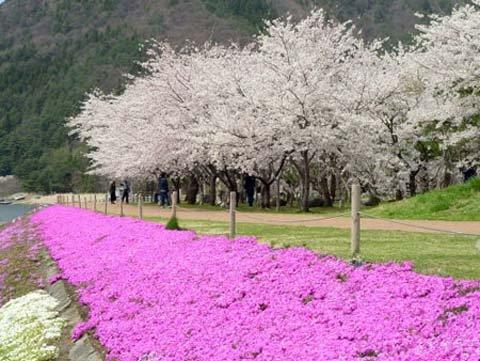 Sông Hồng lọt top thắng cảnh đẹp nhất thế giới 20110922152745-thangcanh3_091926