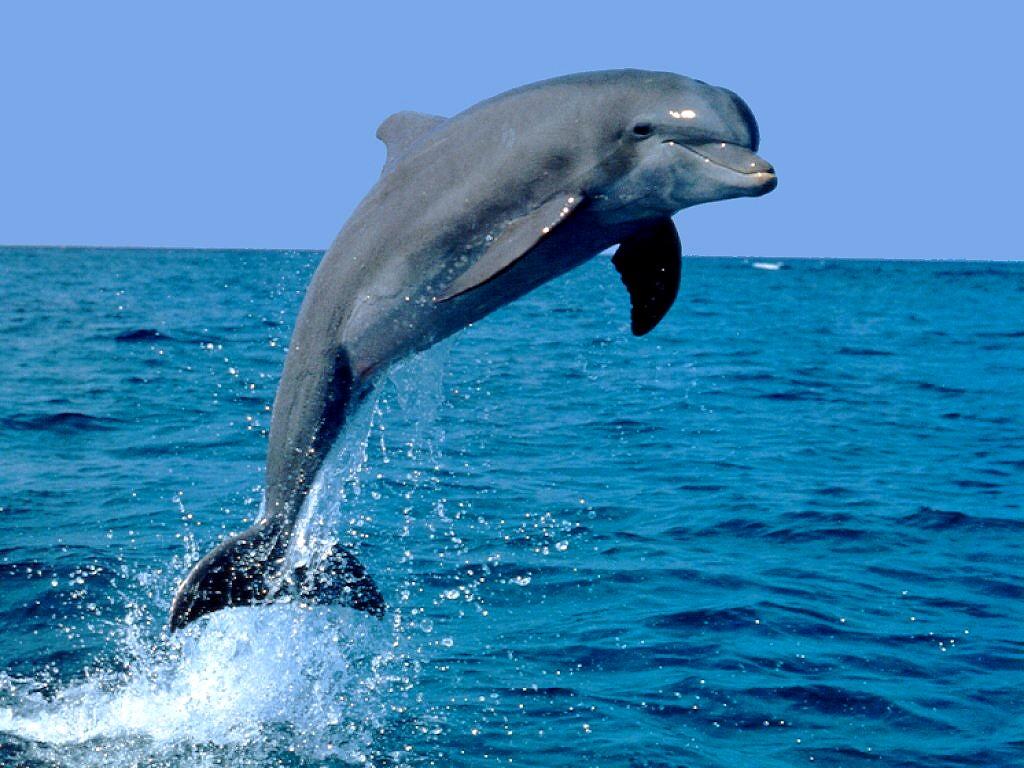 Axl reparte amor. Delfin
