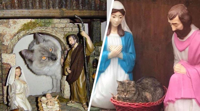 un chat a trouvé le moyen de s'incruster dans la crèche de Noël Couv-3