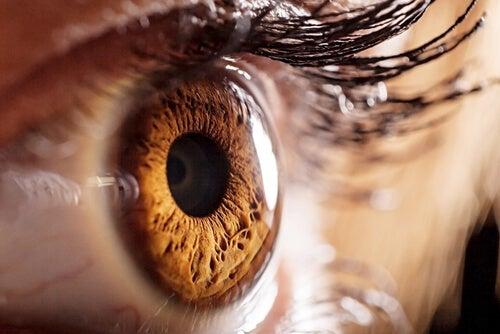 Los secretos de las pupilas Shutterstock_245692879