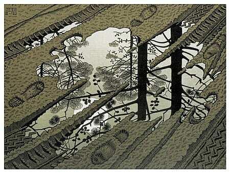 L'arbre de la gravière Escher-juill09-2