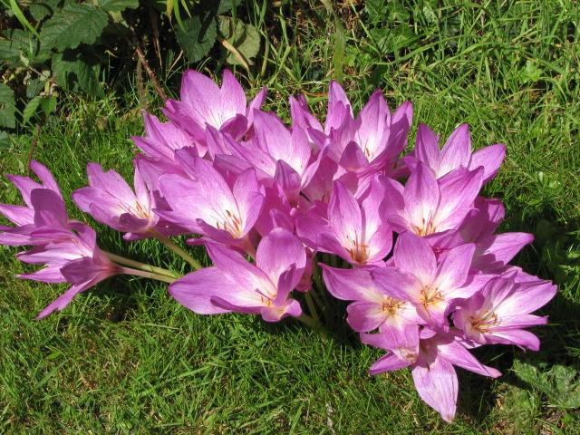 Растения, которые могут обеспечить человеку мучительную смерть 1394016487