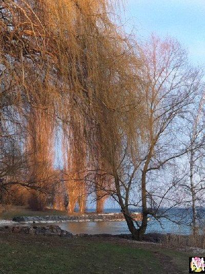 Neuchâtel - Un autre lac jurassien 2012-03-11_c