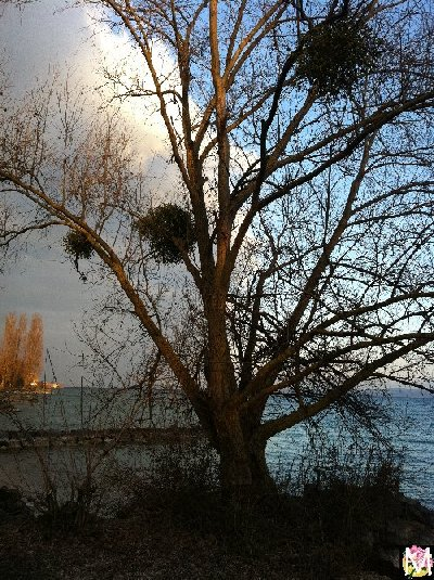 Neuchâtel - Un autre lac jurassien 2012-03-11_d