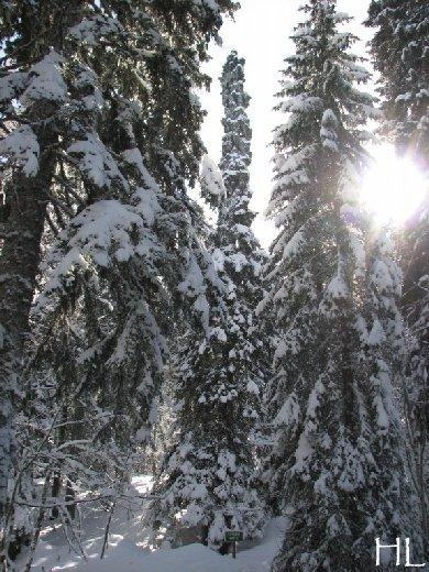 """Une """"baladaski"""" d'Hélène - Le tour du Mont Pela - 20 février 2010 0006"""