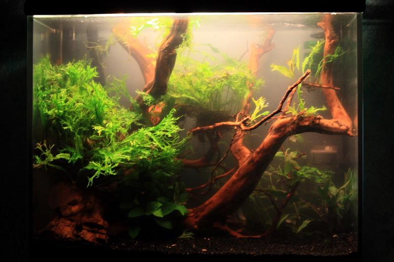 Mon 90L planté (avec RAZOR 8000K 120W!) Aquarium001