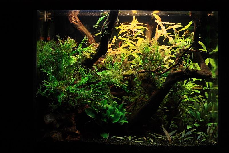 Mon 90L planté (avec RAZOR 8000K 120W!) Aquarium002