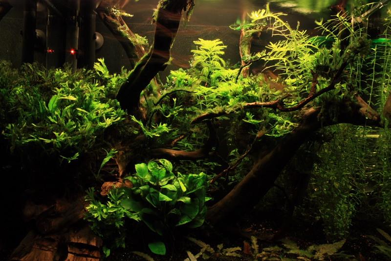 Mon 90L planté (avec RAZOR 8000K 120W!) Aquarium003