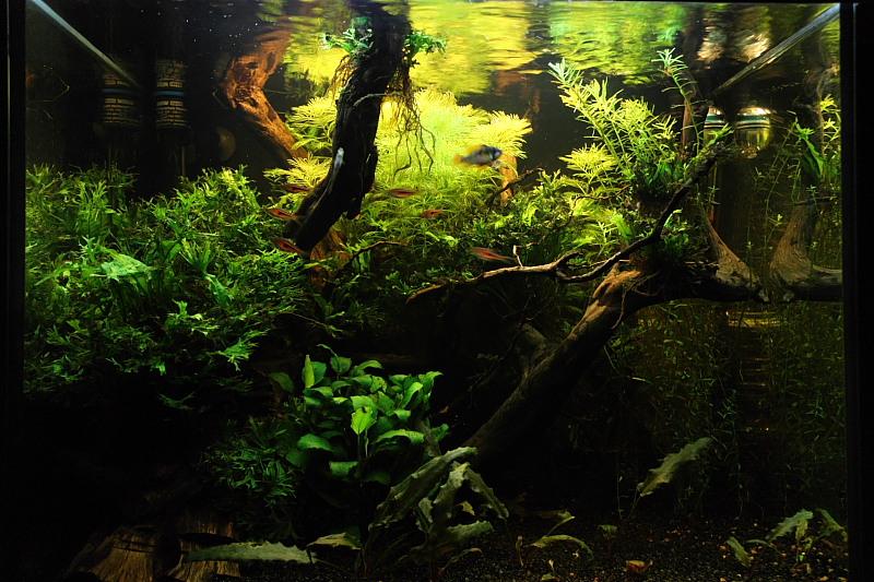 Mon 90L planté (avec RAZOR 8000K 120W!) Aquarium006