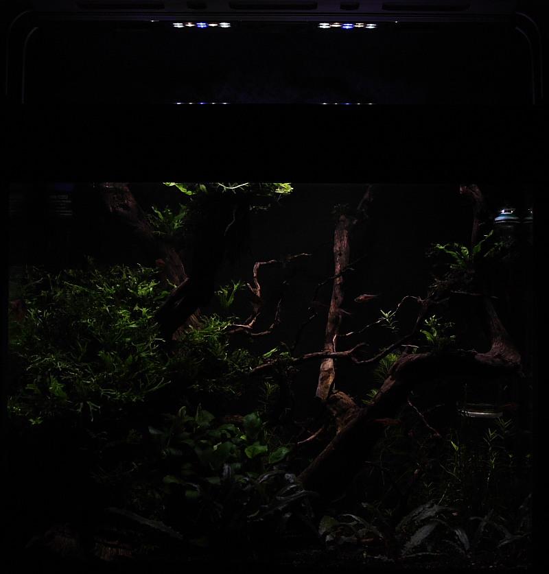Mon 90L planté (avec RAZOR 8000K 120W!) Aquarium010