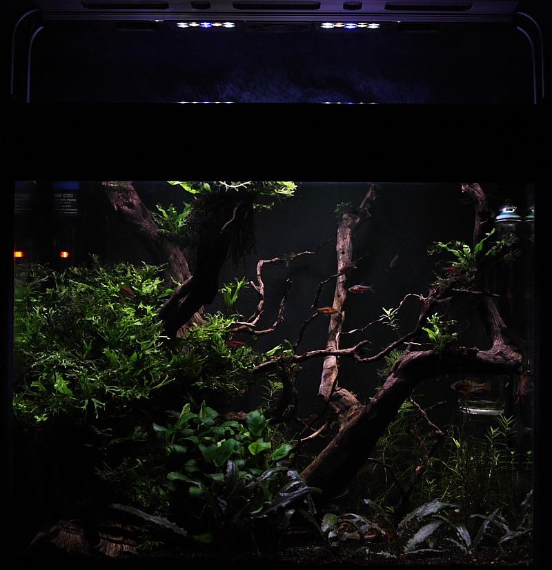 Mon 90L planté (avec RAZOR 8000K 120W!) Aquarium011_10p