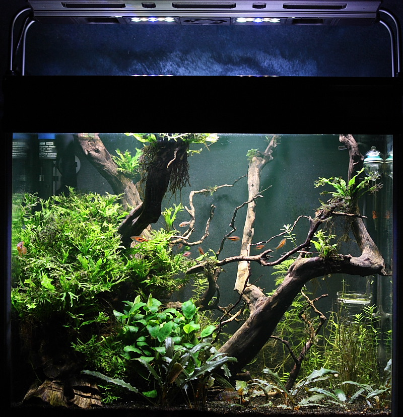 Mon 90L planté (avec RAZOR 8000K 120W!) Aquarium013_40p