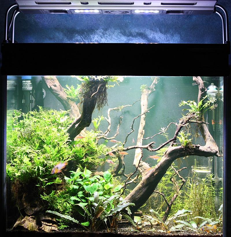 Mon 90L planté (avec RAZOR 8000K 120W!) Aquarium014