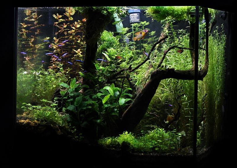 Mon 90L planté (avec RAZOR 8000K 120W!) - Page 2 Aquarium026