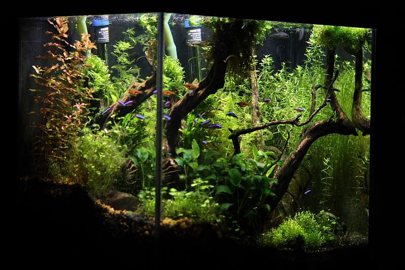 Mon 90L planté (avec RAZOR 8000K 120W!) - Page 2 Aquarium027