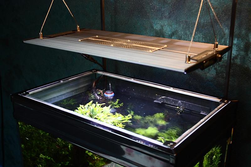 Mon 90L planté (avec RAZOR 8000K 120W!) Aquarium24