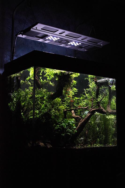 Mon 90L planté (avec RAZOR 8000K 120W!) Aquarium25
