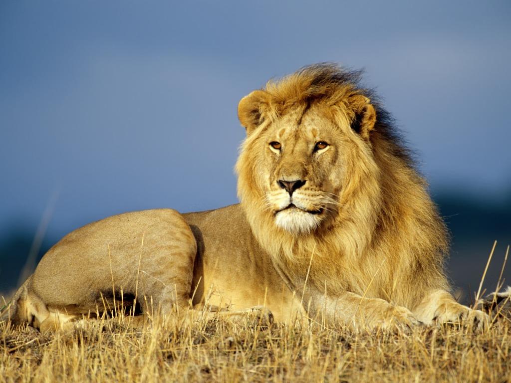 Postavi sliku i zatrazi sledecu - Page 4 Afric48dki-lav