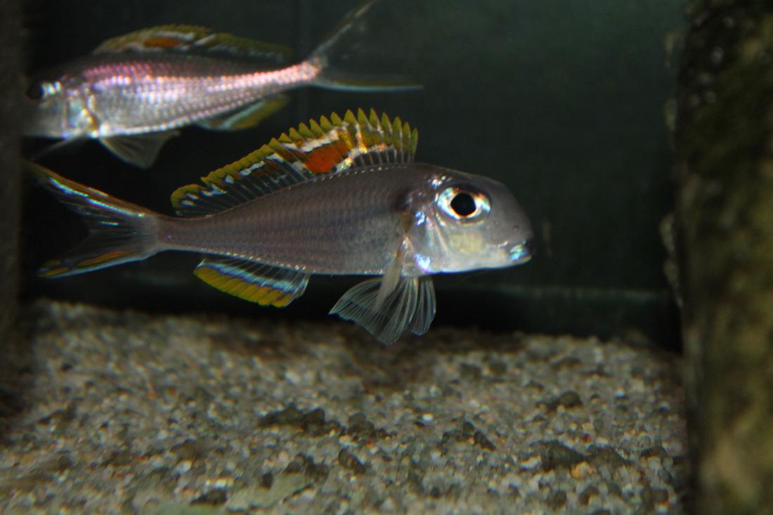 Votre poisson préféré ...  4039427_orig