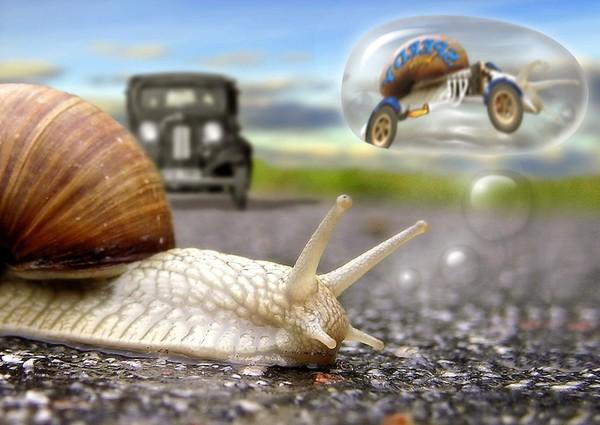 Les escargots 05c0c09d