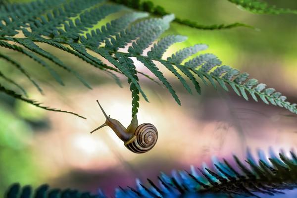 Les escargots 11fd8f2c