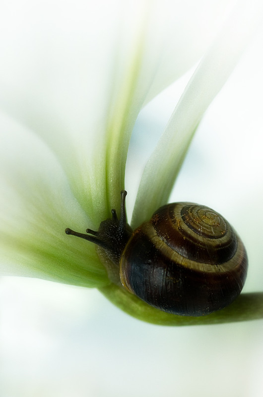 Les escargots 1e67ecc8