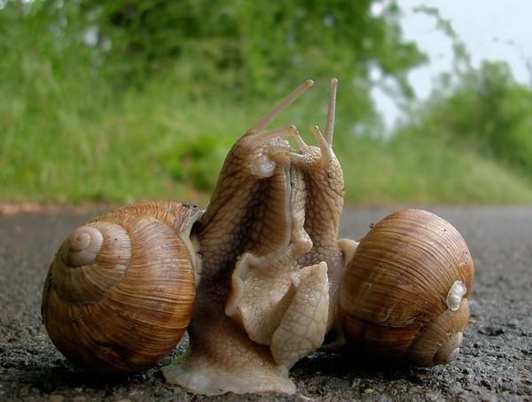Les escargots 3b8162ff