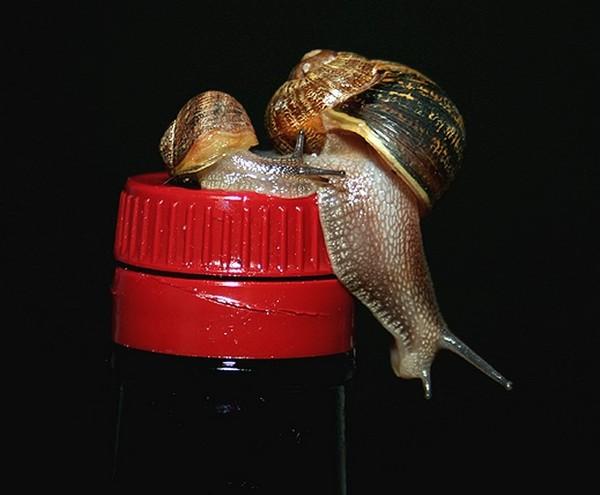 Les escargots - Page 3 64336f63