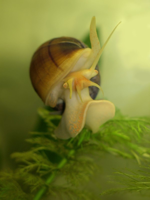 Les escargots - Page 3 807c3838