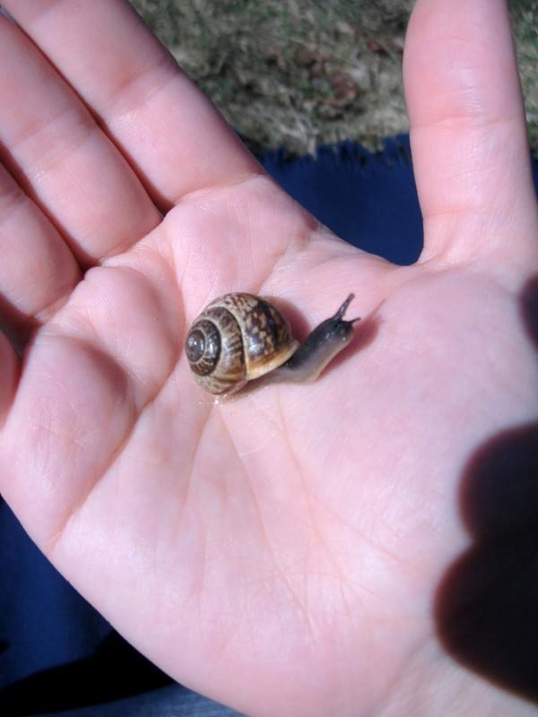 Les escargots 90be5c0e