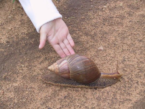 Les escargots B4cd30fe