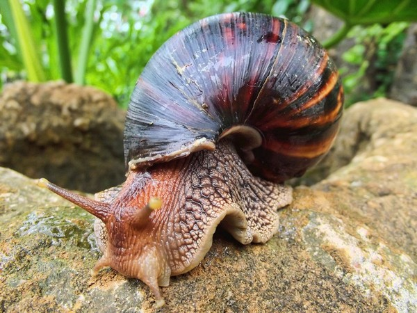 Les escargots C0302e57