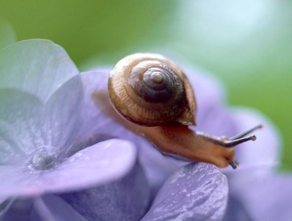 Les escargots Cfb57ca6