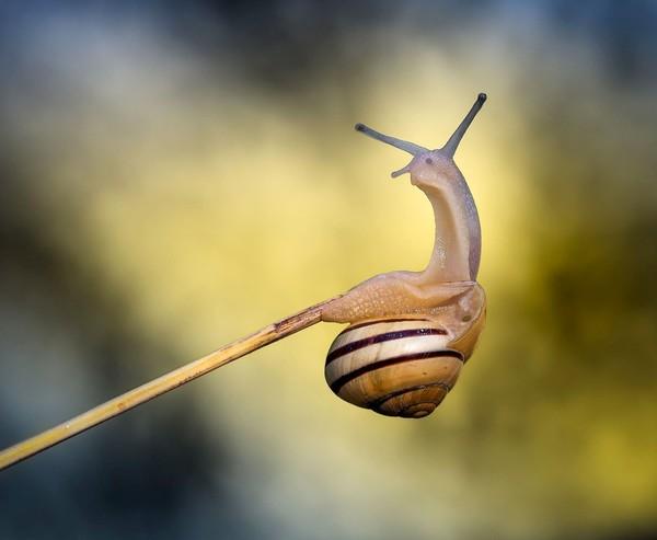 Les escargots E0ef70b2