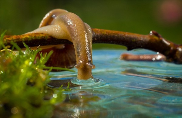 Les escargots E76b330f