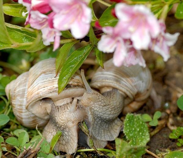 Les escargots - Page 3 Edabe7c2