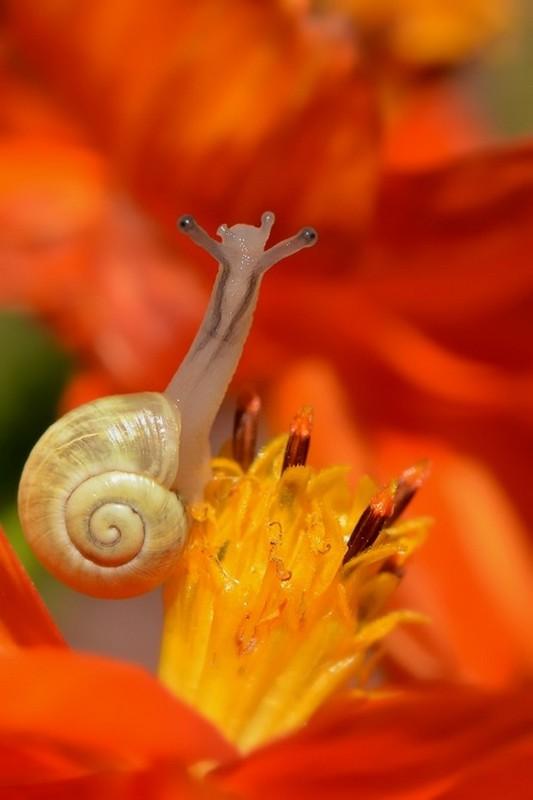 Les escargots - Page 3 F4a5e005