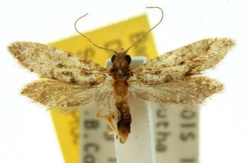 Sưu tập Bộ cánh vẩy  Queenslandensis4