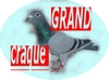 grand craque