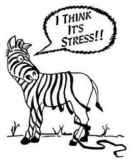 """Les """"Stupid Zèbres"""" c'est nous... - Page 19 Stress-ZebraStripes"""