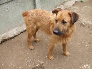 ULNO - x griffon 8 ans  (7 ans de refuge)- Les Amis des Bêtes à Medis (près de Royan) 17 Photo_485