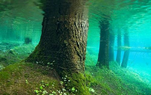 Aucun trucage dans ces photos incroyable du lac Grüner See FfH2q