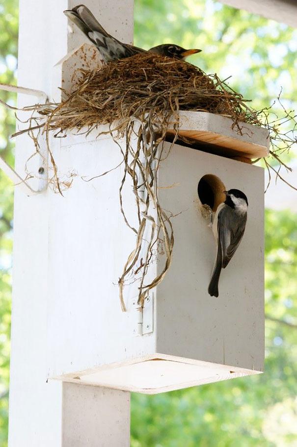 C'est de toute beauté : sites et lieux magnifiques de notre monde. Bird-nests-unusual-places-15__605