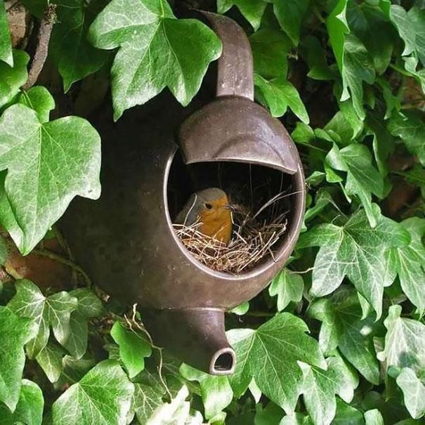C'est de toute beauté : sites et lieux magnifiques de notre monde. Bird-nests-unusual-places-18__605
