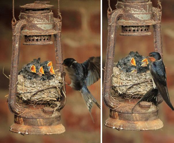 C'est de toute beauté : sites et lieux magnifiques de notre monde. Bird-nests-unusual-places-1__605