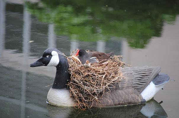 C'est de toute beauté : sites et lieux magnifiques de notre monde. Bird-nests-unusual-places-25__605