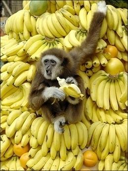La banane, un must dans l'alimentation du cycliste? 663310681