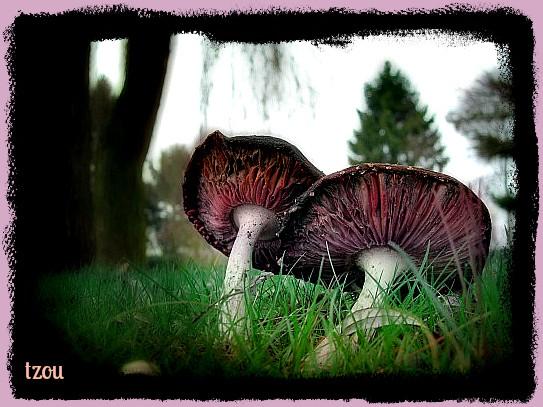 Les champignons  F53b0e89