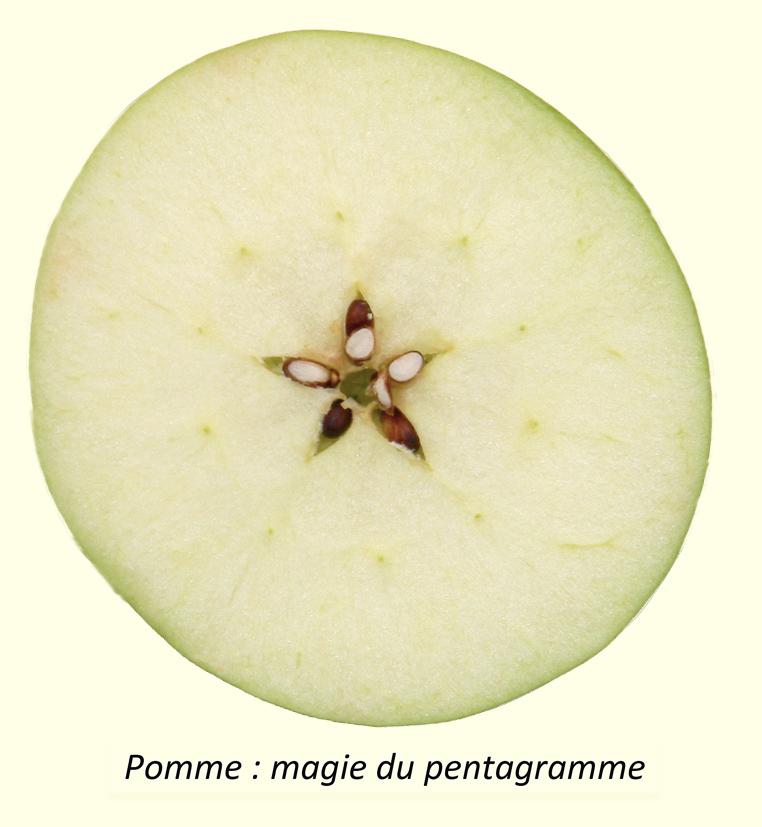 [Jeu] Association d'images - Page 20 Pentagramme-1
